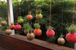 DIY Hanging Garden Class @ Blooming Grounds Downtown | Winona | Minnesota | United States